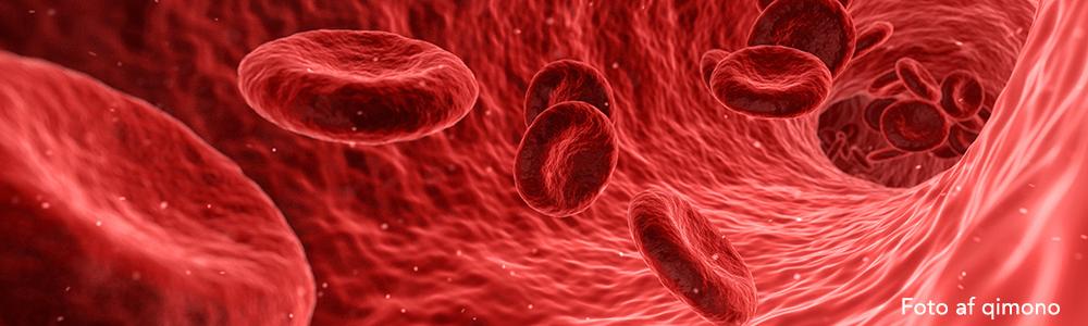 K2 vitamin blodårens helt