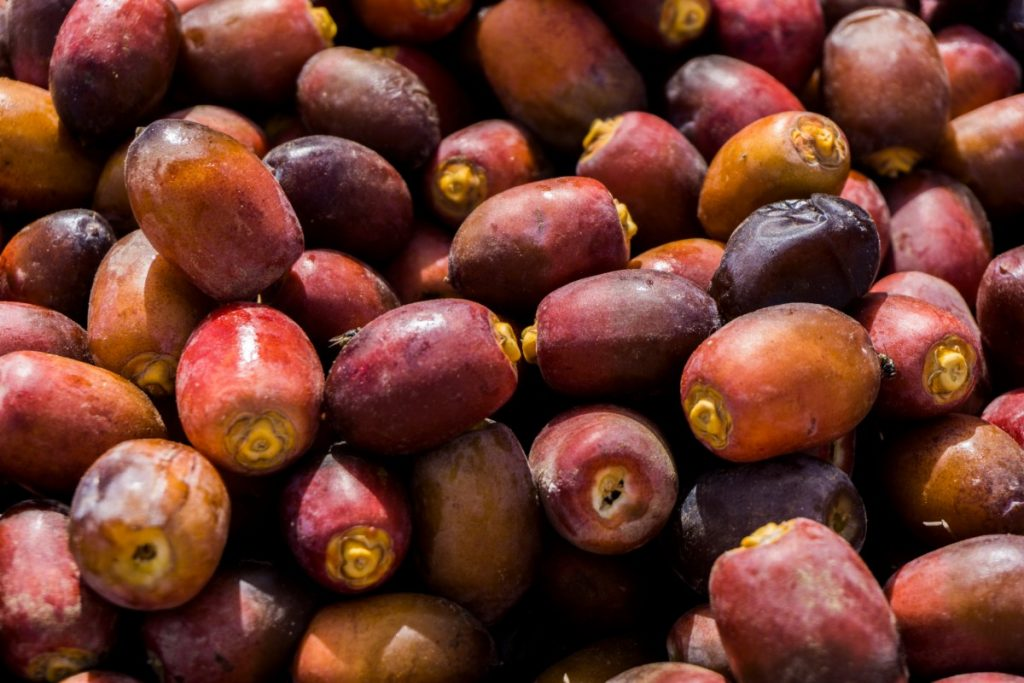 Fresh dates on a souk in Oman.