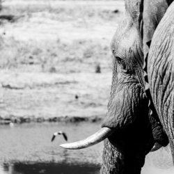 BehindOurLens-Elephant Sands