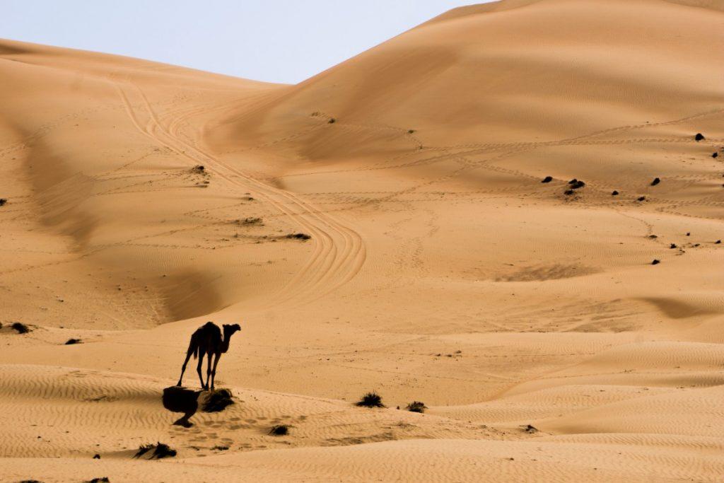 Oman - Le pays des 1001 Nuits - Désert avec chameau