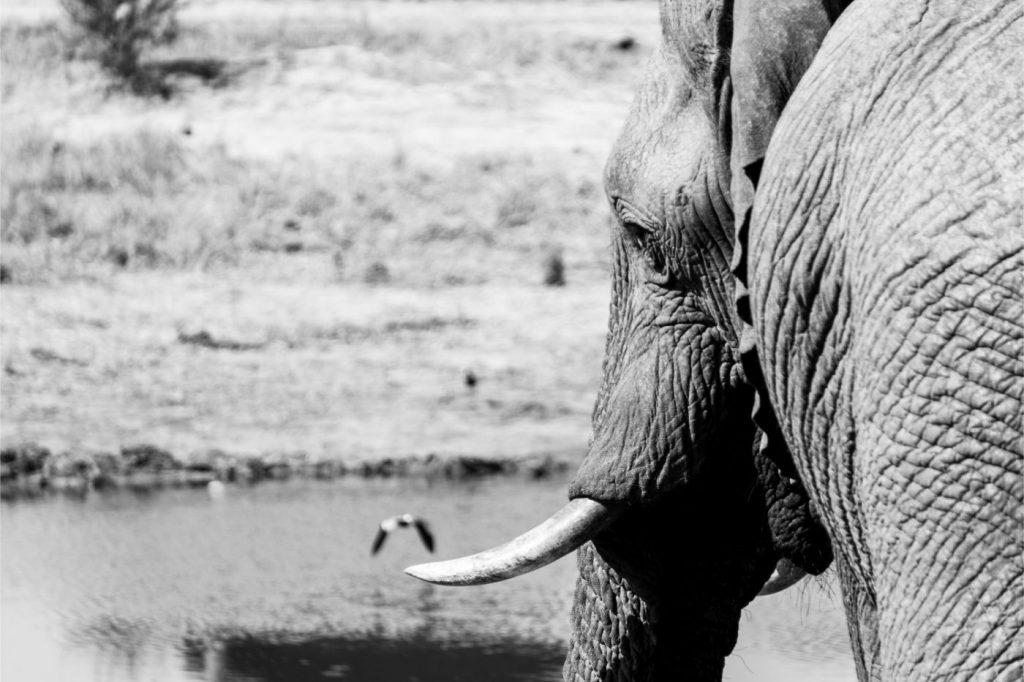 One Second-Derrière l'objectif- Elephant Sands