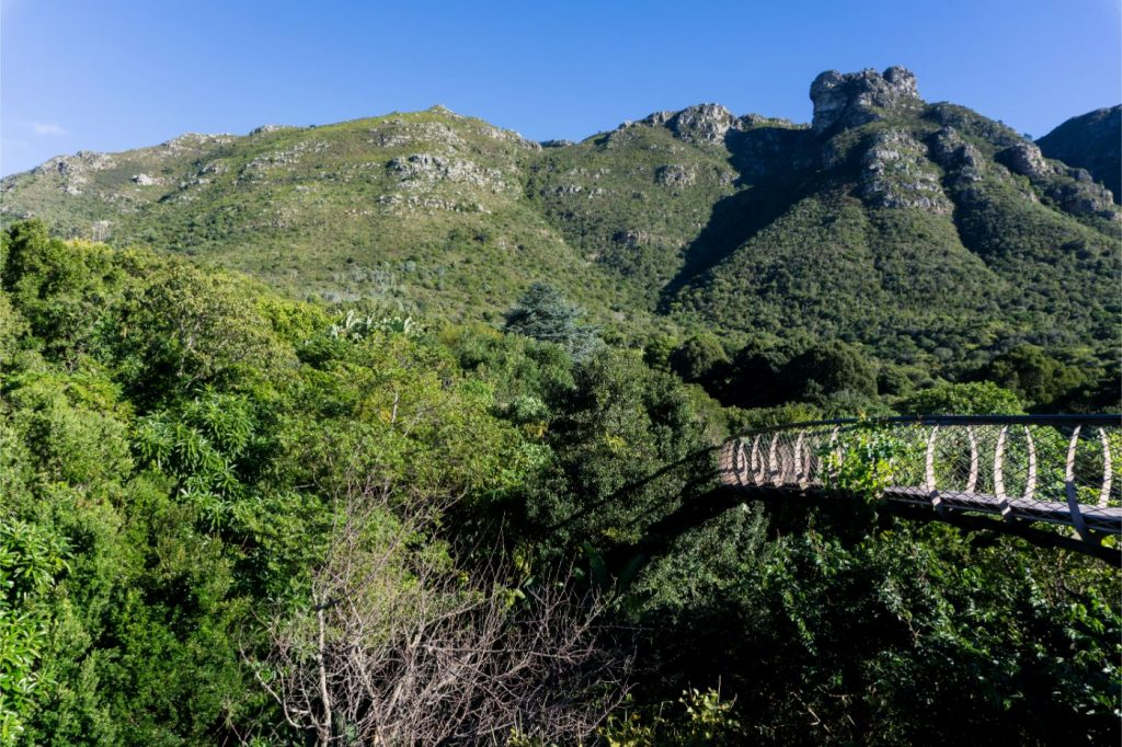table-mountain-view-forest