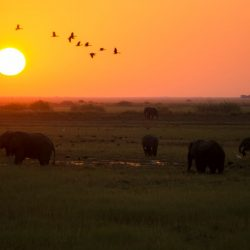 One Second-Reintroduction of poaching elephants in Botswana & which part we are playing in it