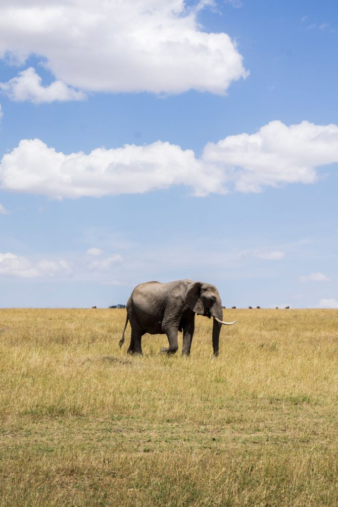 One-Second-Sustainability-How-to-be-a-better-traveler-for-yourself-the-planet-that-you-love-exploring-Wildlife-Elephant