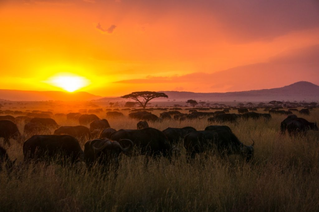 Africa Travel Guide - Tanzania