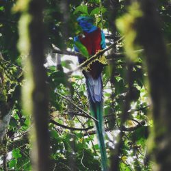 One Second- Costa Rica- Monteverde Cloud Forest-Quetzal