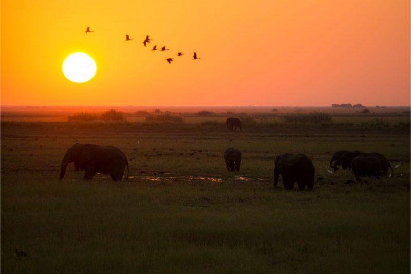 One Second-Réintroduction de la chasse aux éléphants au Botswana- quel rôle jouons nous?