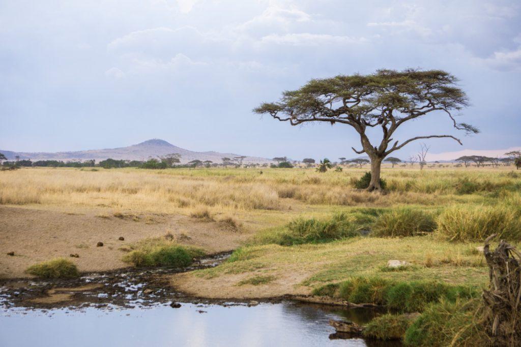 Classic Serengeti landscape