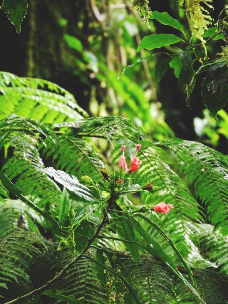 One Second- Costa Rica- Fôret de nuages Monteverde- Nature