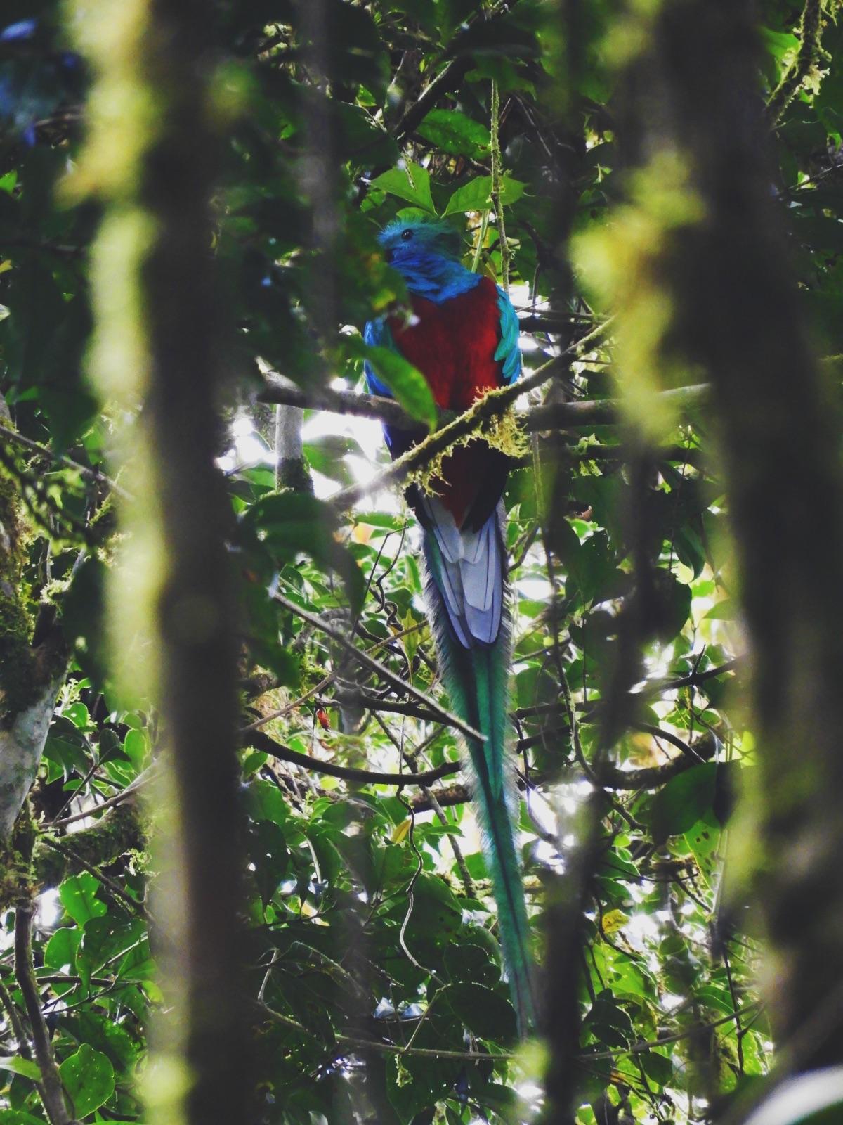 One Second- Costa Rica- Fôret de nuages Monteverde - Quetzal