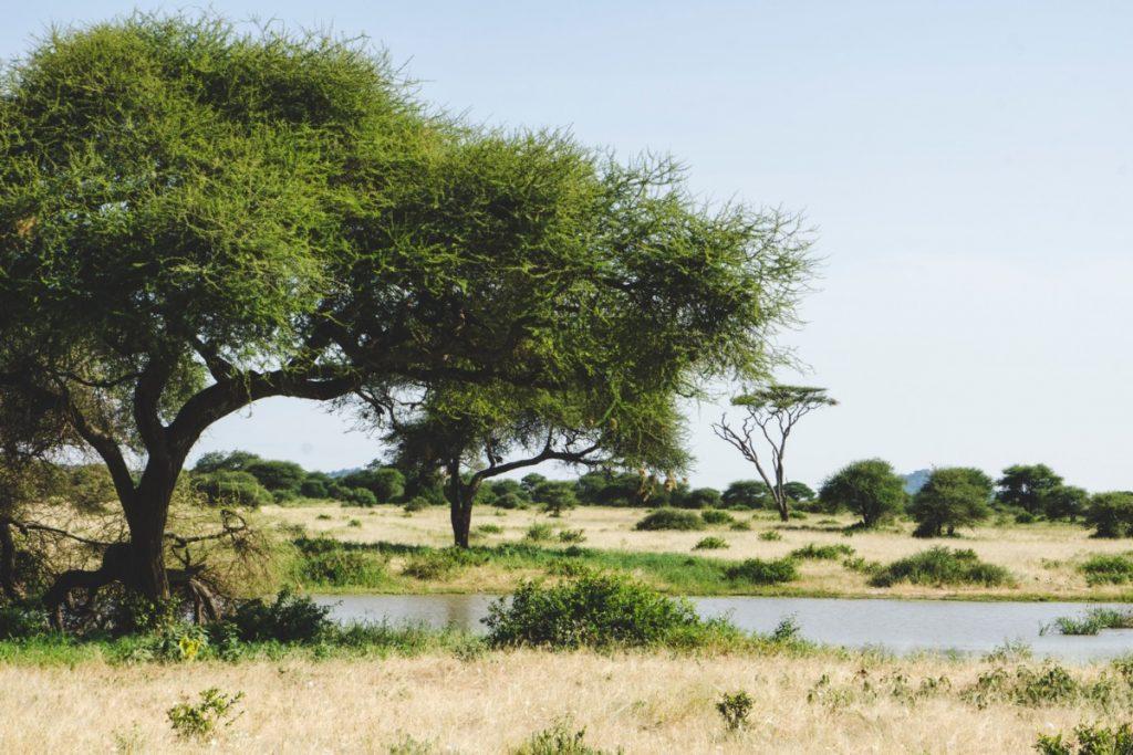 Paysage au parc national du Tarangire