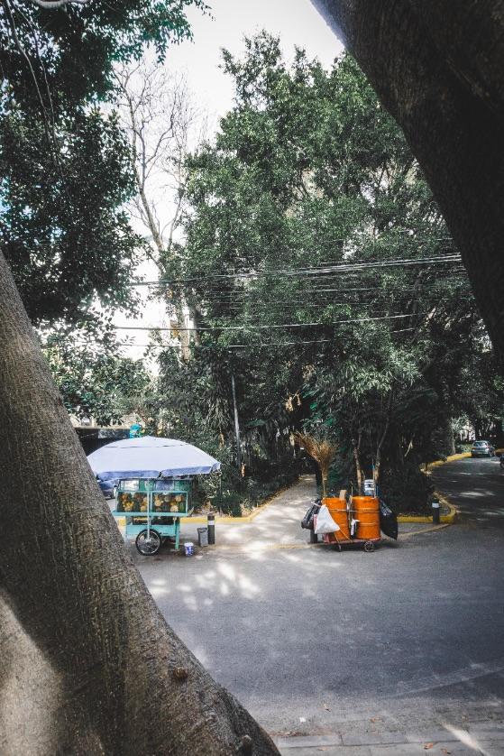 La Condesa park Mexico City