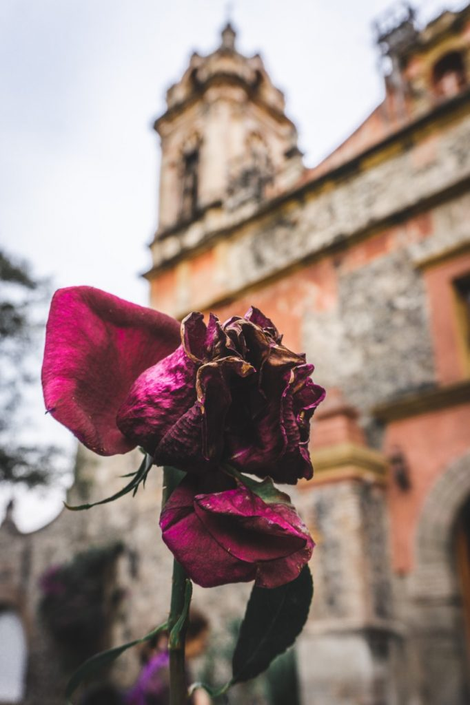 Rose in front of church San Angel Mexico City