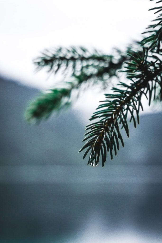 Beauty of nature on a rainy day around the Eibsee Lake