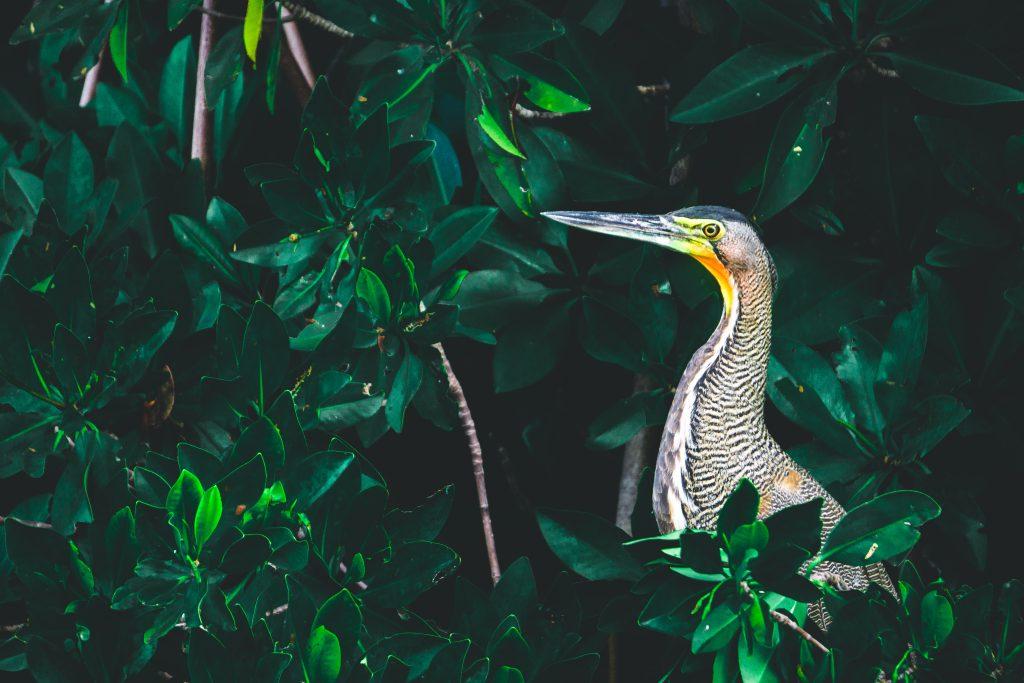 Découverte de la faune sauvage dans la réserve naturelle de Sian Ka'an - Yucatán - Mexique