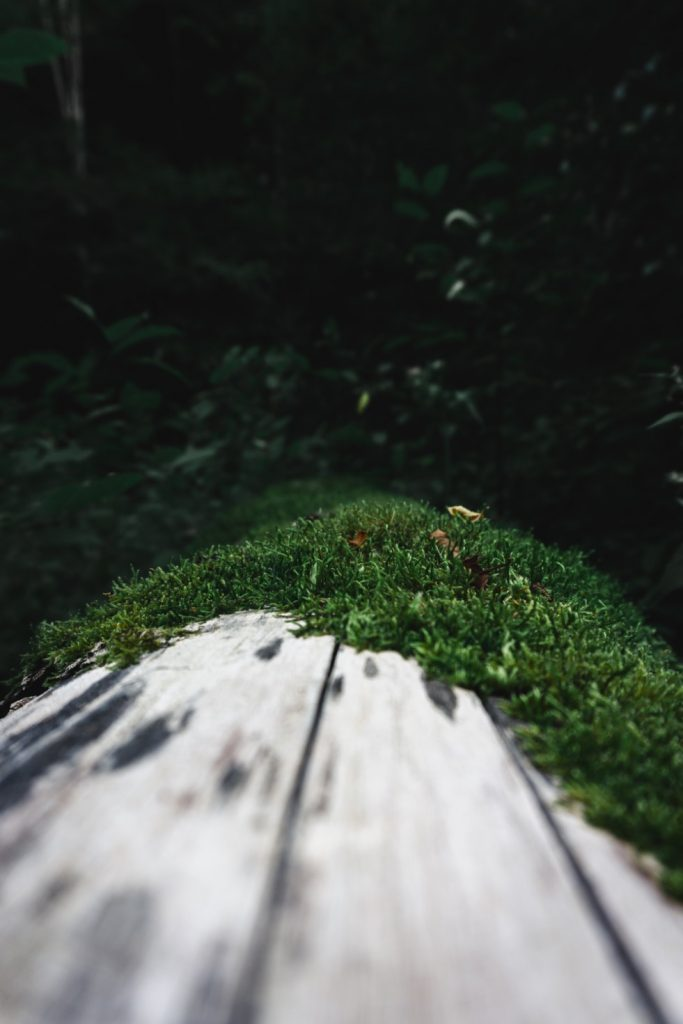 One Second Journal - Randonnée dans la forêt noire - détail mousse