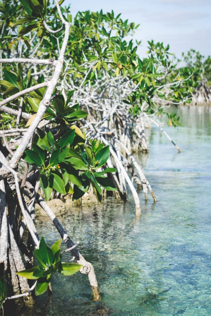 Rich fauna and flora in the Sian Ka'an Reserve - Yucatán, Mexico in pictures