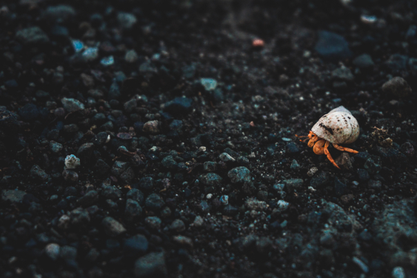 Hermit crab - Martinique - One Second Journal