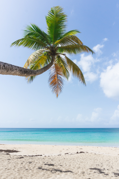 Plage des Salines - Martinique - cocotier