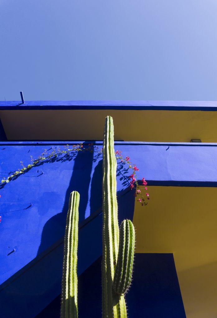 Cactus - Jardin Majorelle - les incontournables lors d'un séjour à Marrakech