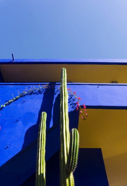 Cactus - Majorelle Garden - Marrakech