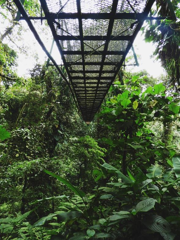 Canopy-Tour-Monteverde Cloud Forest