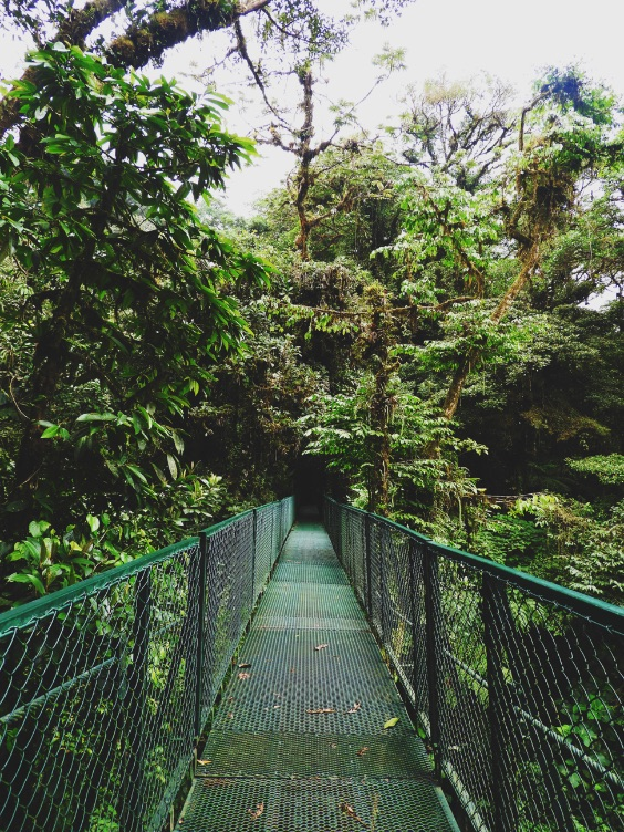 -Canopy-Tour-Monteverde Costa Rica