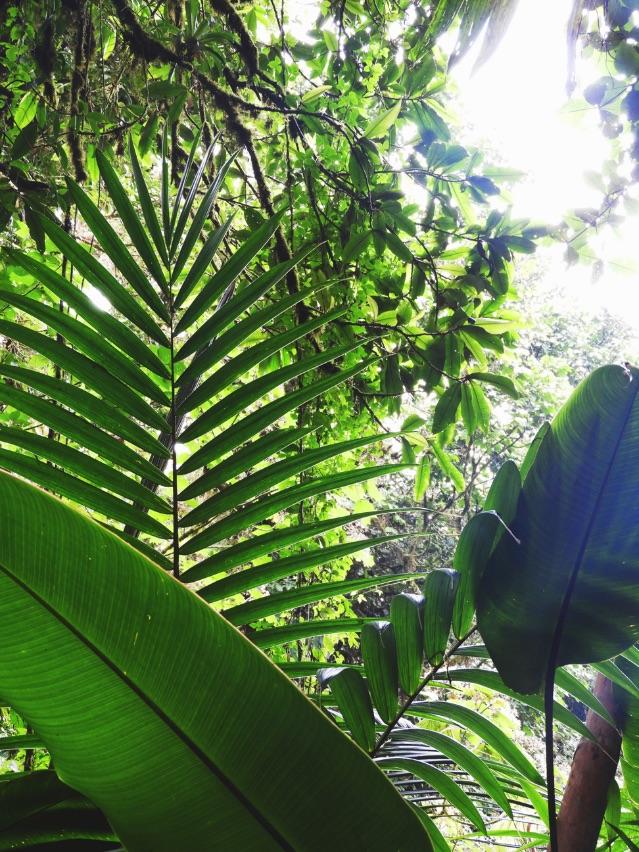 Luxurious-Monteverde-Cloud-Forest-Costa-Rica