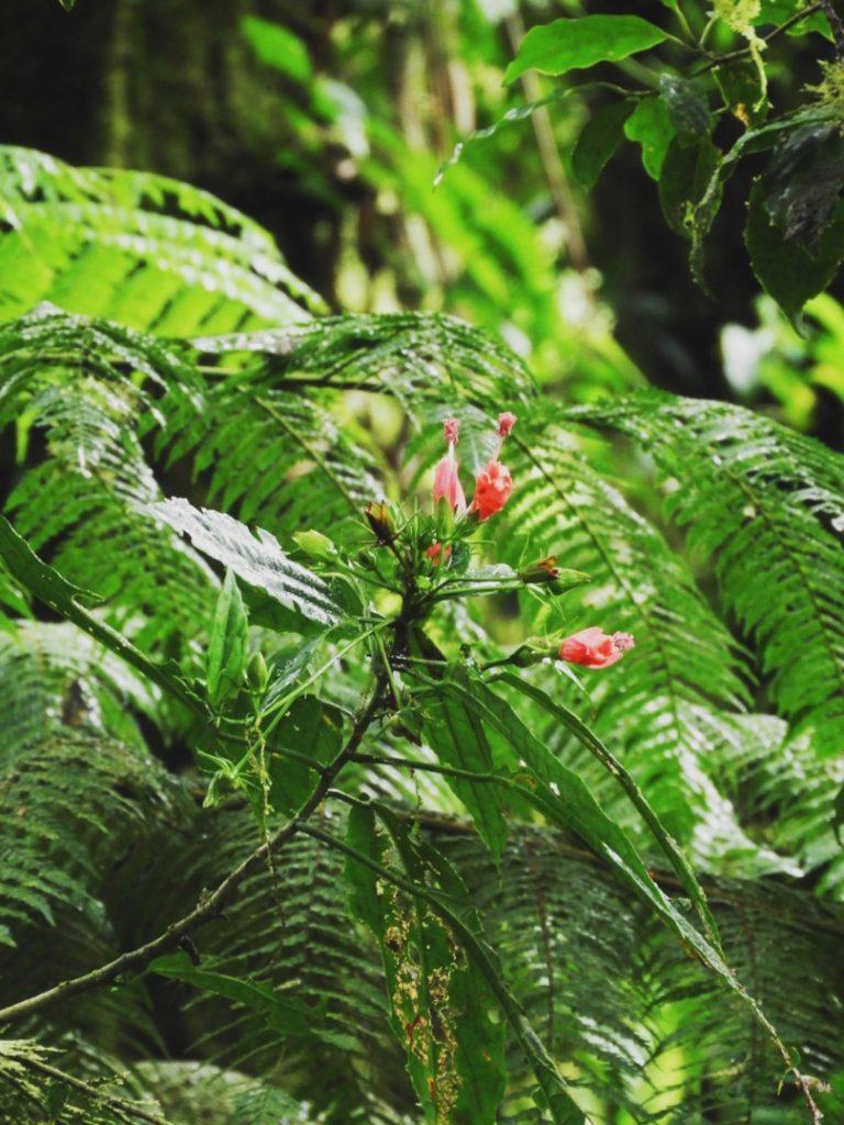 Monteverde-Cloud-Forest-Costa-Rica