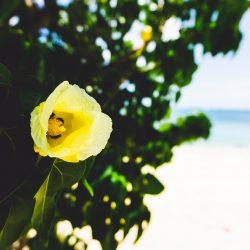ou-sejourner-martinique-plage
