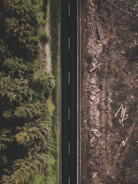 réduire-impact-environnemental-travail-deforestation
