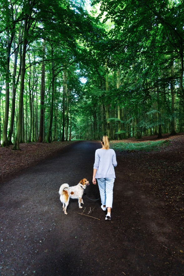 walk-jasmund-national-park-forest