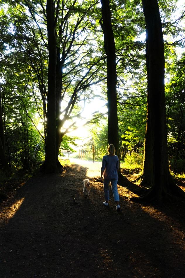 jasmund-national-park-forest-germany