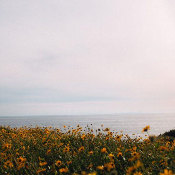 flowers-ocean-sustainable-banking