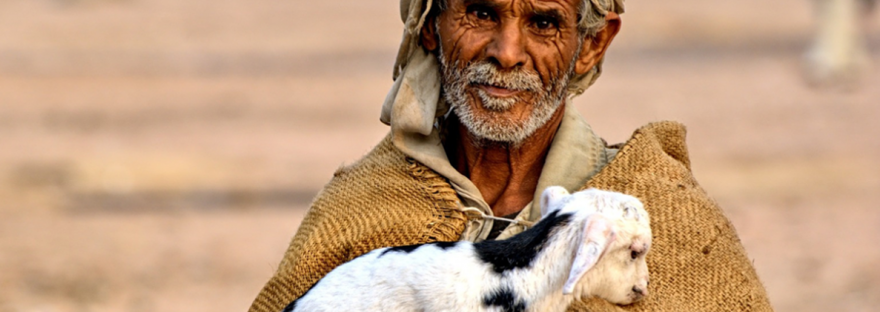 Bedouin man carrying lamb