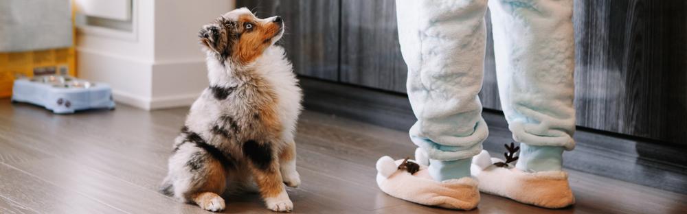 hundevalp som sitter og ser på hundeeieren sin