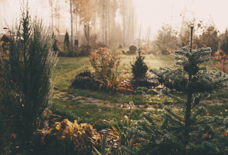 genieten van de tuin in de winter