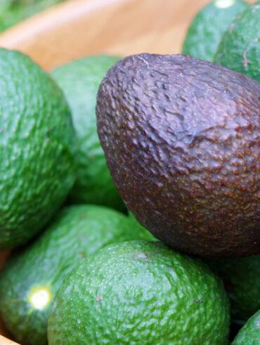 dol-op-avocado