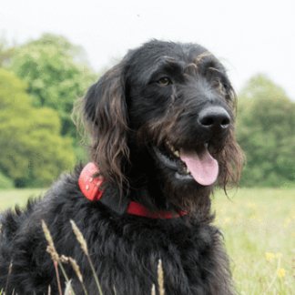 Dog Tracking Devices (And Accessories)