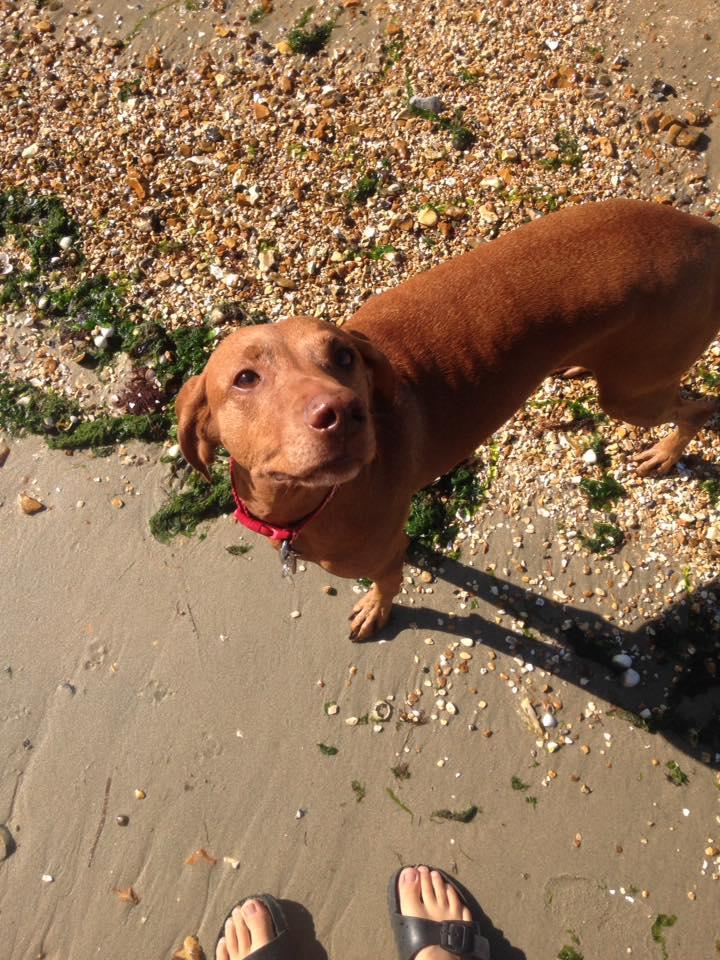 Insured Dog Walker in Locks Heath