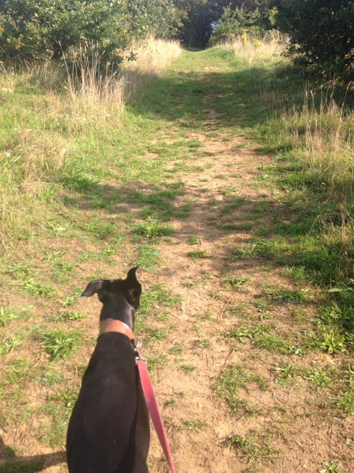 Weekend Dog Walker