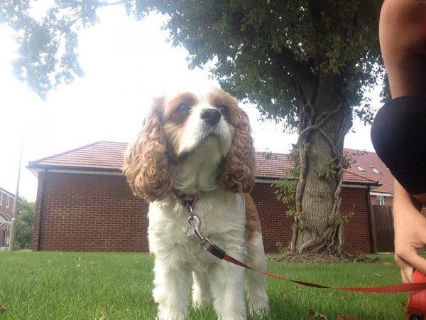 Dog Walker in Warsash