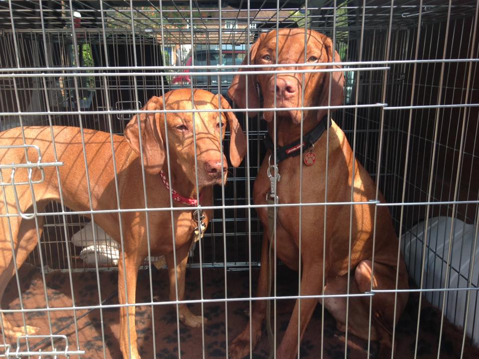 Experienced Dog Walker in Locks Heath