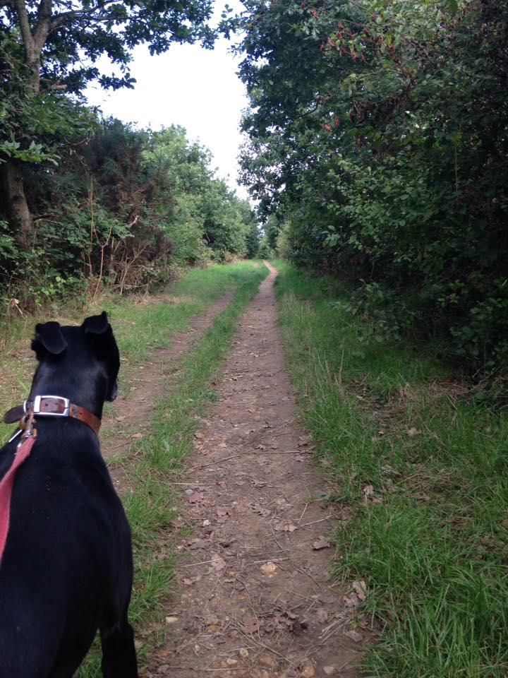 On lead dog walk in Netley
