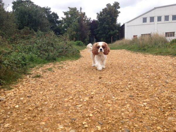 pet sitter in swanwick