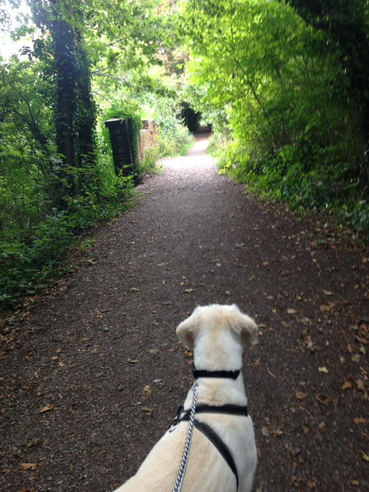 pet sitter in titchfield