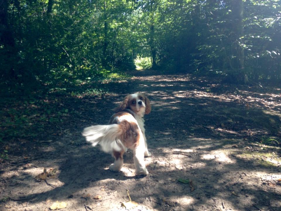 dog jogger in locks heath