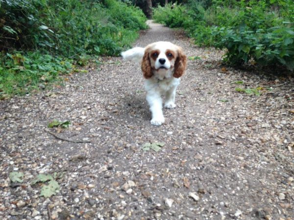 pet sitter in warsash