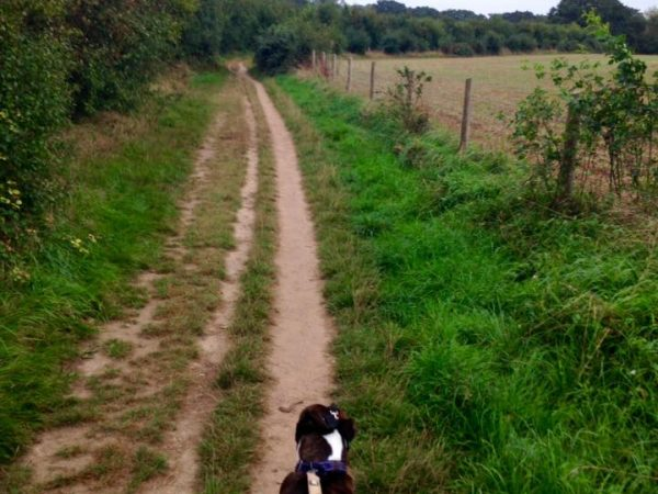 on lead dog walker locks heath