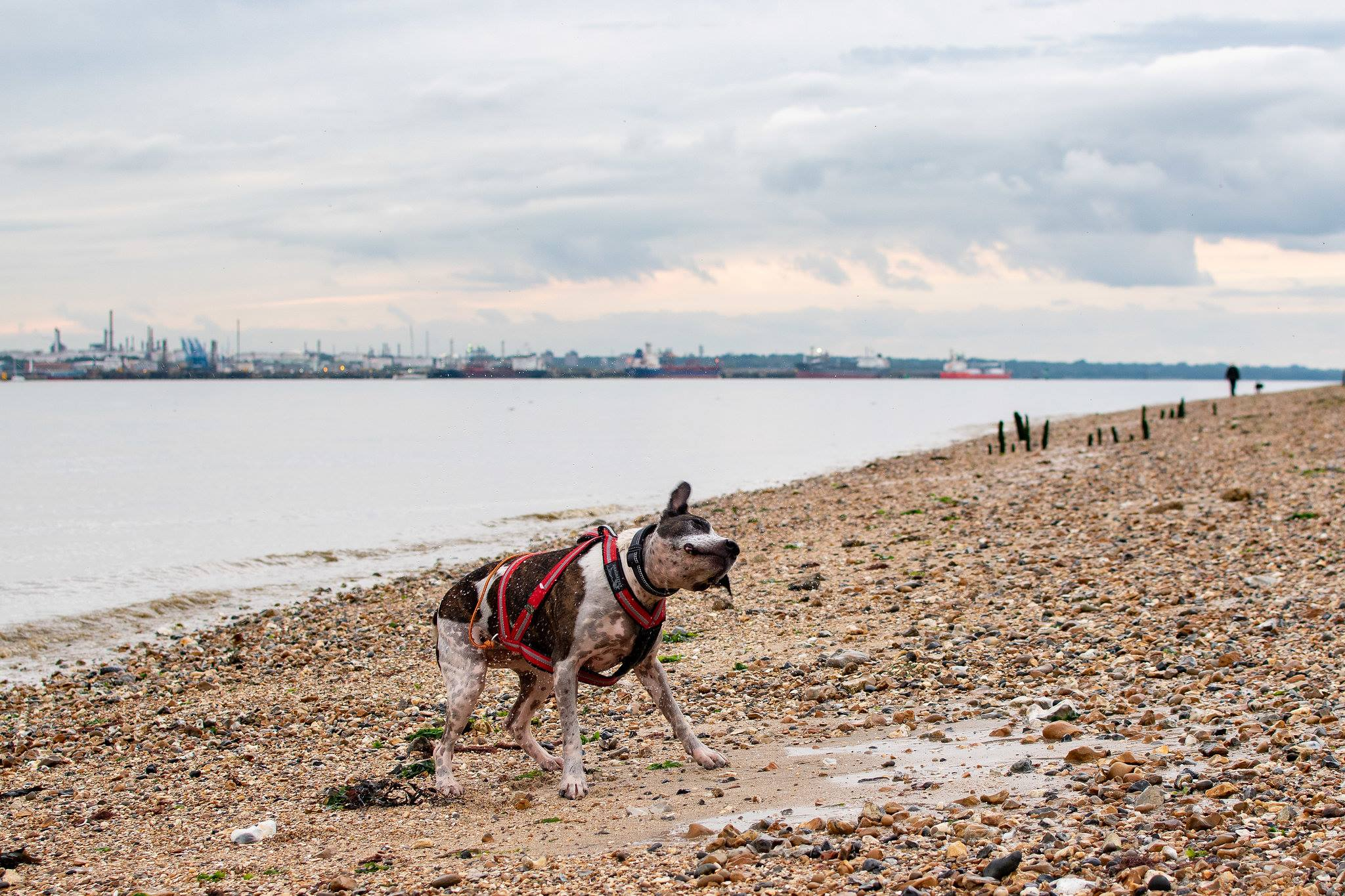 dog jogger in titchfield